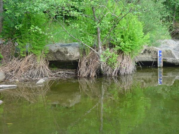 Niveau de l'eau, près du petit barrage du Nassier