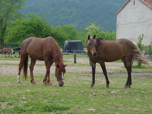 Chevaux du ranch du Foussac, pour une belle balade dans les forêts de Gravières