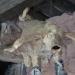 Cochons du Musée vivant du cochon près de Les Vans